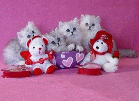 Valentine S Day Kittens Cats Animals Background Wallpapers On