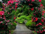 Alley of Roses