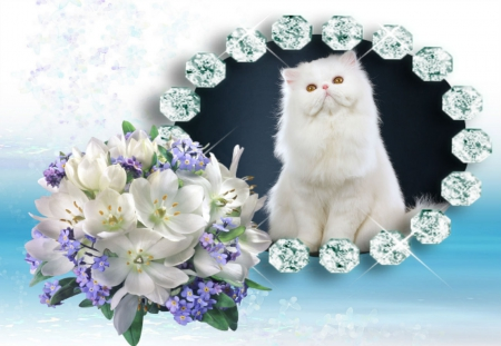 Waiting for Spring - blue flowers, Diamonds, white flowers, white cat