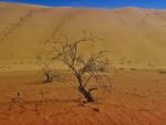 sandy trees