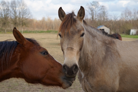Horses & Animals Background Wallpapers