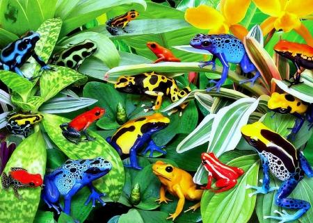 E2 98 86friendly Frogs E2 98 86 Gardening Softness Beauty Attractions In Dreams Beautiful