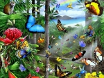 ★Tropical Butterflies★