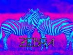 Trippy Zebras