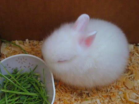 Too Cute Tiny Bunny Wabbit Other Animals Background Wallpapers On Desktop Nexus Image 1687454
