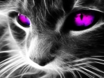 Cool Cat =^..^= Ultra~Violet Eyes