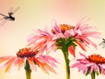 Echinacea and Dragonflies