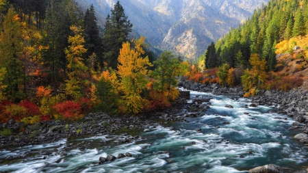beautiful rapid flowing river in autumn - mountain, forest, rocks, autumn, rapids, river