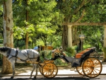 horse and carriage ride at a park in sevilla spain