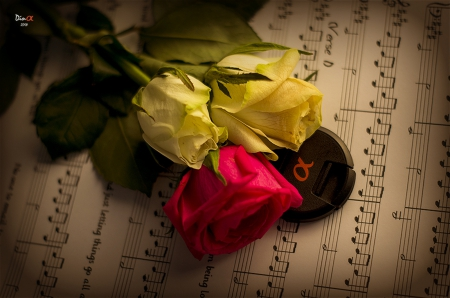 ✿ - yellow roses, red rose, colorful, music, tribute