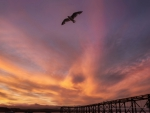 seagull flying above a pier at sunset