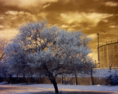 The Tree And The Water Tank - color, tree, photography, sky