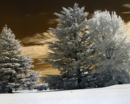 Winter Dreams - color, photography, trees, winter