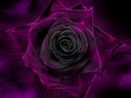 Under The Rose - art, purple, rose, velvet