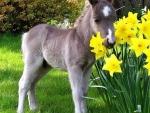 lovely spring scene