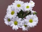 Lovely White Flowers!