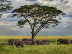 a herd of elephants on the savanna hdr