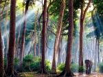 Walking Throu Forest