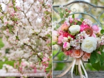 apple blossoms diptych
