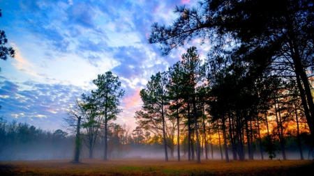 a misty forest at sunrise - forest, sunrise, clouds, mist