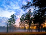 a misty forest at sunrise