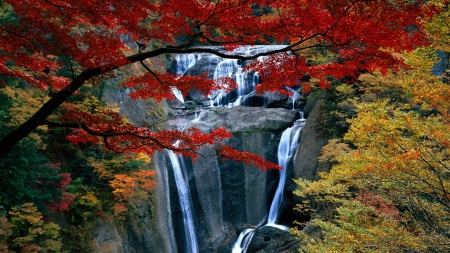Stunning Waterfalls - forces of nature, monutain, waterfalls, white, red, nature, yellow, green, plants, streams, rocks