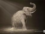 elephant,endangered