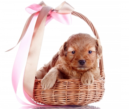 With Love - with love, adorable, sweet, dog face, cute, puppies, basket, animals, dogs, puppy, dog