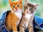 Kittens in jeans