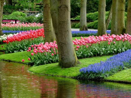 Keukenhof gardens - pretty, colorful, lovely, grass, beautiful, spring, park, trees, freshness, water, flowers, gardens, keukenhof, tulips, river, reflection