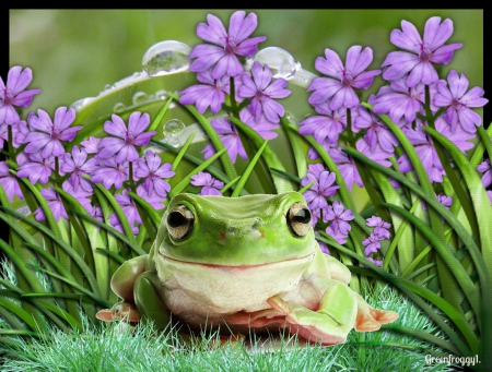 Frog In Flower Patch
