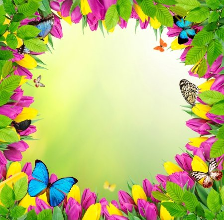 Flowers Butterflies Flowers Nature Background Wallpapers On