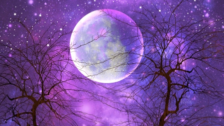 Moonlight and Stars - stars, Viola Tricolor, art, romantic, design, creation, trees, moon, purple, moonlight, dream, night