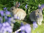 rabits on the meadow