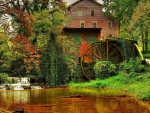 old forest mill with a giant wheel