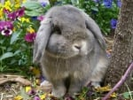 cute bunny in a garden