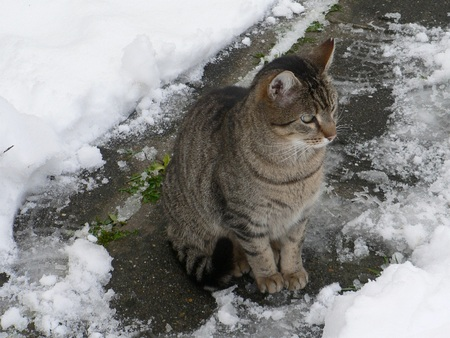 """""""CAT WINTER"""", New Science-Fantasy Fiction by Mollie Hunt ...  