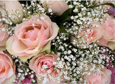 Pink roses and baby breath flowers nature background wallpapers pink roses and baby breath mightylinksfo