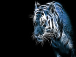 Tiger Fractal in Blue