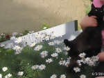 cat in daisies