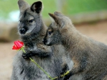 LOVE IN AUSTRALIA