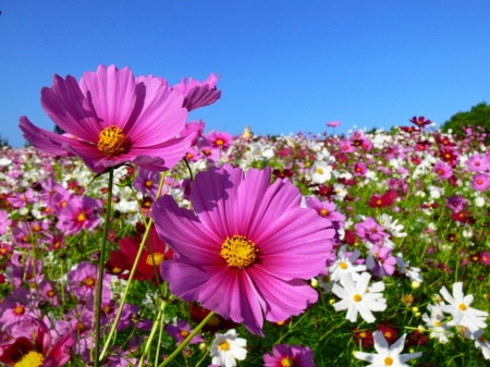 Field Of Spring Flowers Fields Nature Background Wallpapers On