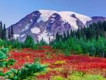 Majestic snowy mountain