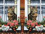 Mirrored cats