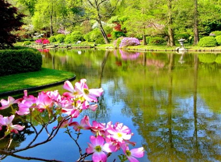 Spring park - forest, shore, greenery, spring, park, trees, lake, pond, water, blossoms, flowers, blooming, branches
