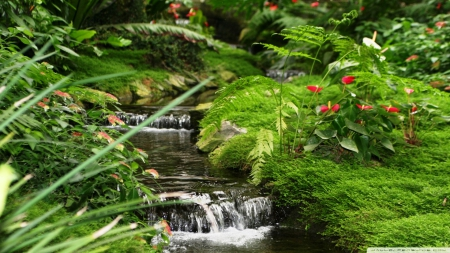 Little Water stream - forest, stream, rocks, water, plants, flower, waterfall, streams