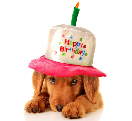 Birthday Dog Dogs Amp Animals Background Wallpapers On