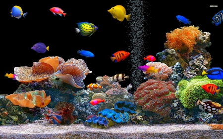 Fish - underwater, fish, animal, aquarium