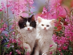 kittens among pink flowers