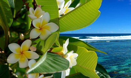 ♥Tropical Flowers♥ - beach, vacation, ocean, plumeria, flowers, tropical